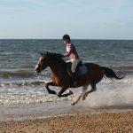 Beach Riding